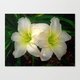 Glowing white daylily flowers - Hemerocallis Indy Seductress Canvas Print