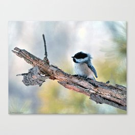 Chickadee Against the Wind Canvas Print