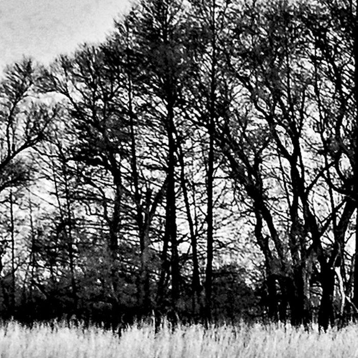 White Symphony of Winter Lake Leggings