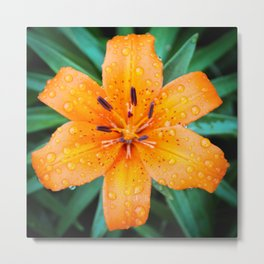 Orange Star Metal Print