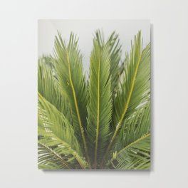 Green Houseplant | Leaf Plant Art  | Fine Art Travel Photography | plant art print Nature Art Print Metal Print