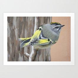 Golden-crowned Warbler Art Print
