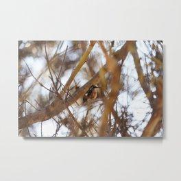 Amethyst Woodstar Hummingbird Metal Print