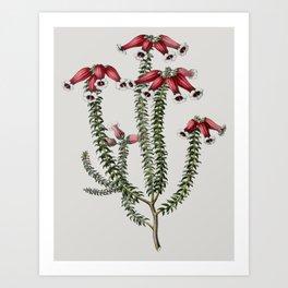 Ericaceae Art Print