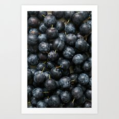 Damson Plums Art Print