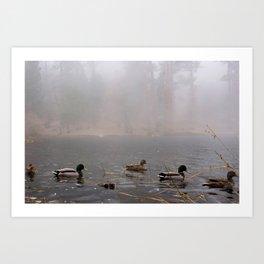 Fog Ducks Art Print