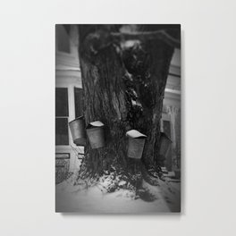 Sugaring 2 - Maple Syrup Metal Print
