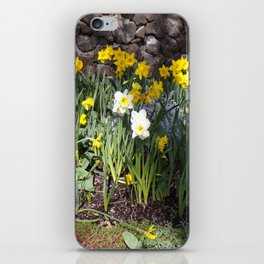 Yellow and White Daffodils Against a Rock Wall iPhone Skin