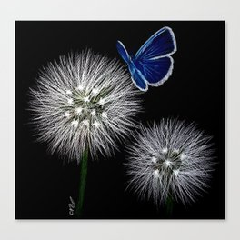 butterfly blue on dandelion Canvas Print