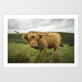 Hairy Coo Art Print