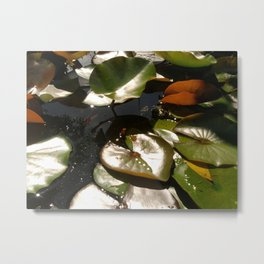 Frog and Lotus Leaves Metal Print