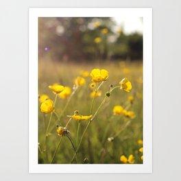Wild Flowers | Buttercups Art Print