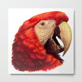Scarlet Macaw Parrot realistic painting Metal Print