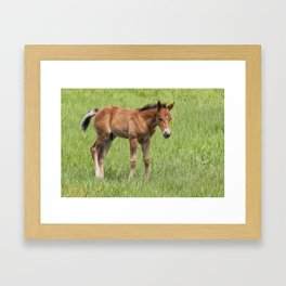 Little Colt Framed Art Print