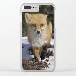 Red Fox on Snowy Beach Clear iPhone Case