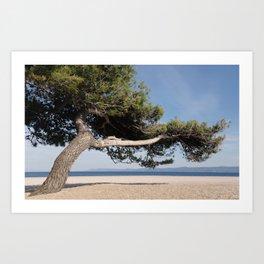 Pine Tree on Mediterranean beach Art Print
