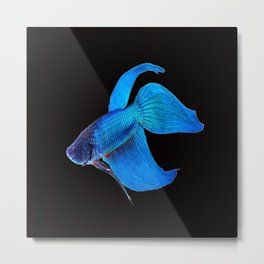 Fighting Fish Metal Print
