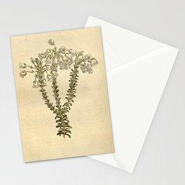 Flower 1399 erica odorata Perfumed Heath10 Stationery Cards
