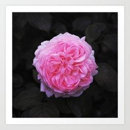 Flower (Beautiful) Art Print
