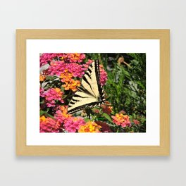 Swallowtail on Lantana Framed Art Print