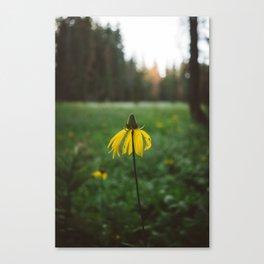 Yosemite National Park XIV Canvas Print