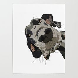 Great Dane dog in your face Poster