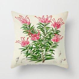 Grevillea Rosea Vintage Botanical Floral Flower Plant Scientific Illustration Throw Pillow