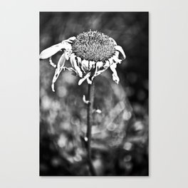 Wilted Flower Canvas Print
