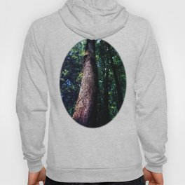 Tree Trunk Hoody