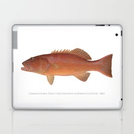 Common Coral Trout Laptop & iPad Skin