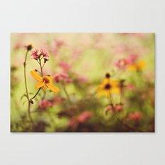 Lemon drop Flower box Canvas Print