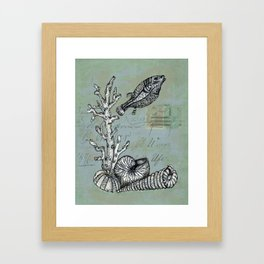 Vintage Shells Framed Art Print