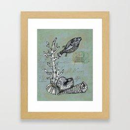 Vintage Shells Framed Art Print
