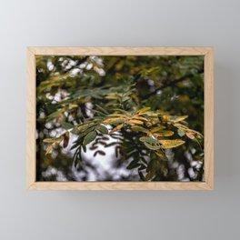Autumnal leaves on tree Framed Mini Art Print