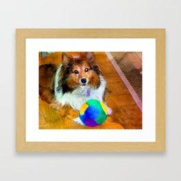 Sheltie with Ball Framed Art Print