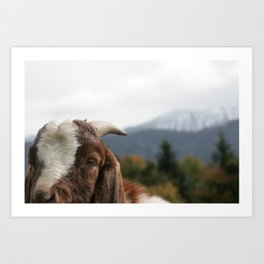 Look who's complaining, funny goat photo Art Print
