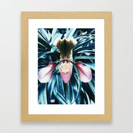 Orchid Passion Framed Art Print