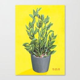 Point & Shoot - ZeeZee Plant Canvas Print