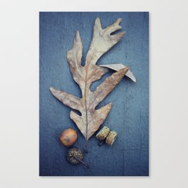 Acorn Canvas Print