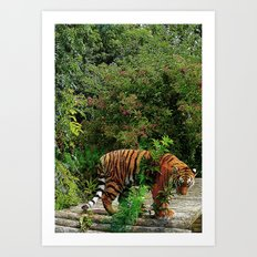 Colourful Tiger Art Print
