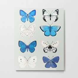 Lepitoptery No. 2 - Blue and White Butterflies and Moths Metal Print