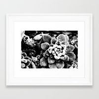 furry Framed Art Prints featuring Furry by Zoe L