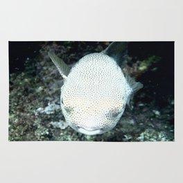 Snorkeling, The Blowfish Rug
