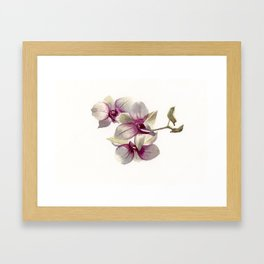 Realistic orchids in watercolor Framed Art Print