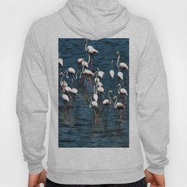Flamingo Birds In Pink and White On Blue Hoody