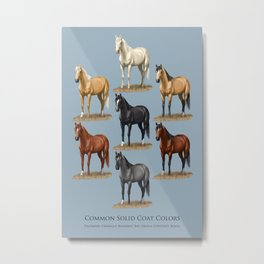 Horse Common Solid Coat Colors Chart Metal Print