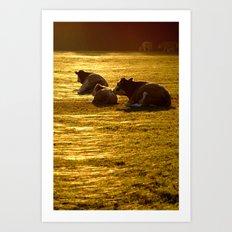 Sitting Cows Art Print