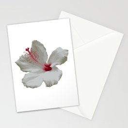 Pure White Hibiscus Tropical Flower Stationery Cards