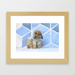 Bunny posing Framed Art Print