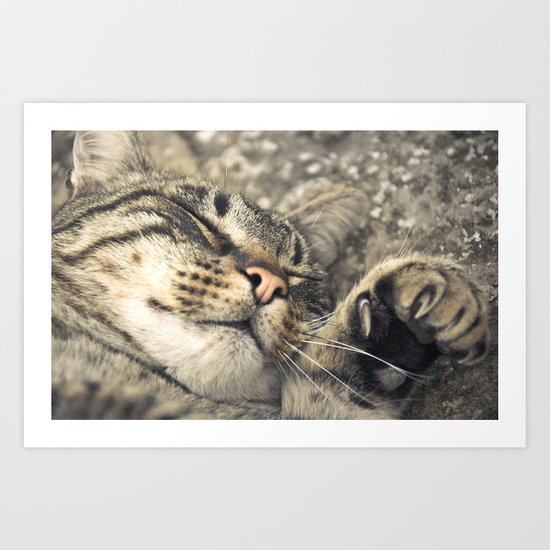 Peaceful cat Art Print